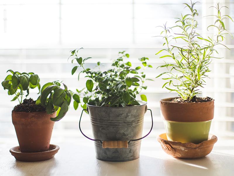 Flat gardening for beginners